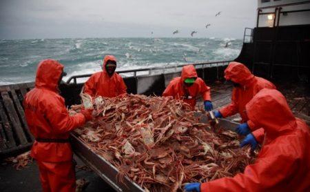 Москвичи хотят отнять у дальневосточных рыбаков сто процентов квот на добычу краба